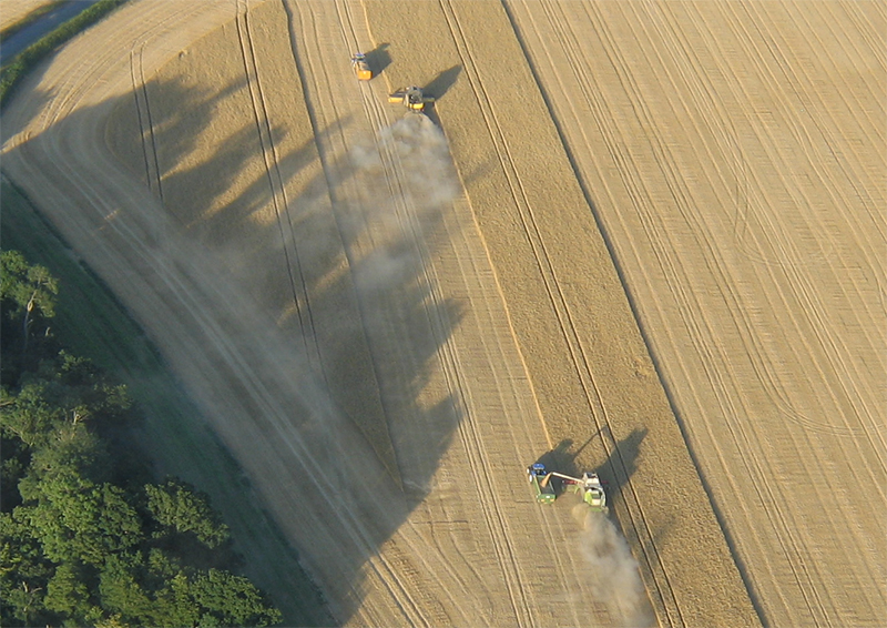 You can be sure of seeing combine harvesters cutting the crops during the summer time as you drift over the golden coloured fields surrounding Barleylads Farm Museum Essex on your hot air balloon flights. It takes skill to keep the tractor and trailer in line as tones of grain pour out of the spout of the combine.